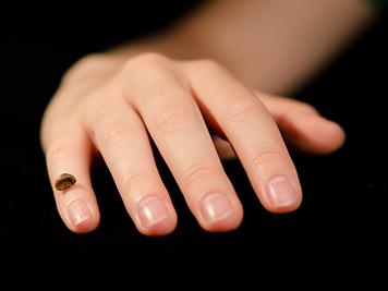 Реплика на фрагмента от кост на пръст на Денисовски човек върху съвременна човешка ръка. Снимка: Институт по Еволюционна Антропология Макс Планк.