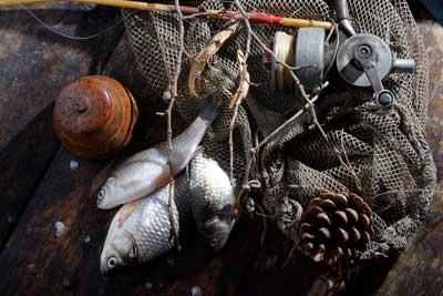 Данните за сложните промени в екосистемите трябва да се имат предвид при определяне на квотите за риболов