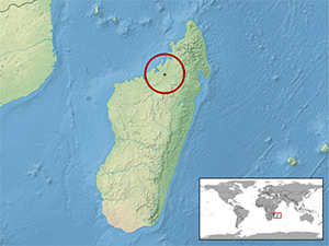 Местообитанието на новооткрития вид гущери Sirenoscincus mobydick. Изображение: rbrausse