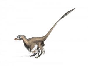 Рисунка на Velociraptor mongoliensis с оперение. Автор: Matt Martyniuk
