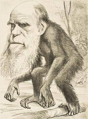 """""""Почитанемият урангутан"""" (1871) - карикатура на Чарлз Дарвин, за който се твърди, че е бащата на офис-стола, защото е инсталирал колелца на стола в кабинета си."""