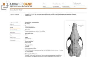 Morphobank позволява комбинирането на генетична и анатомична информация за еволюционен анализ