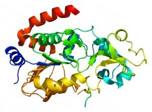 Структура на протеина SIRT3 (кликни за по-голяма версия)