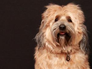 Кучетата най-вероятно разбират нашата гледна точка, твърдят в изследването.
