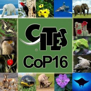 Държавите, участващи в Конвенцията за международна търговия със застрашени видове от дивата флора и фауна (CITES), взеха безпрецедентно решение, гласувайки за специален защитен статут на акули и различни видове тропически дървета. Изображение: CITES