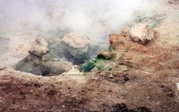 Galdieria расте върху скалите и почвата до горещ извор в националния парк Йелолстоун в САЩ. Снимка: Andreas Weber