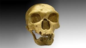 Череп на неандерталец, открит през 1908г. във Франция. По-голямата, отговаряща за зрението, част на мозъка на неандерталците вероятно се е отразила върху способността им да правят нововъведения и да се адаптират към условията през ледниковата епоха, смятат учените. Снимка: Luna04