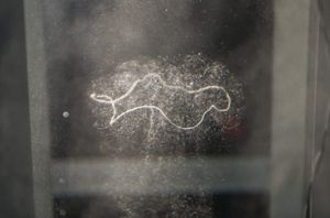 Балончетата газ са по-леки от водата и мигновено биват всмукани към центъра на вортекса, като по този начин го правят видим. Снимка: Робърт Козлов