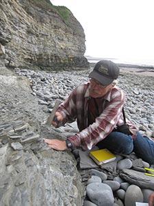 """Пол Олсън на Уелския бряг: при отлив се откриват седиментарни скали, """"документиращи"""" времето, в което тук се е намирало дъното на плитко море, точно преди възхода на динозаврите преди около 200 милиона години. Слоевете се четат като книга. Снимка: Кевин Краик"""
