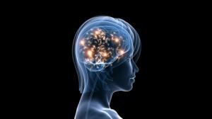 Учените откриха гена CASK, регулиращ процеса на запаметяване