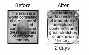 Цял мозък на мишка преди и след двудневната обработка с процеса CLARITY. Ако кликнете на снимката, при увеличената версия се виждат някои елементи от прозрачния мозък. Изследването е направено основно с мозък на мишка, но учените успешно са използвали метода и върху риба зебра и съхранени проби от човешки мозък. Снимка: Университет Станфорд