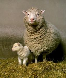 Овцата Доли с първото си малко Бони. Лабораторията, клонирала Доли, създаде прасе по нов метод, наречен генетична редакция. Снимка: University of Edinburgh