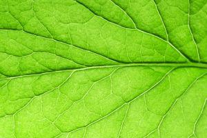 """Слънцето е най-изобилният източник на енергия на планетата, а растенията са """"шампиони"""" в усвояването й, работещи със 100-процентова ефективност"""