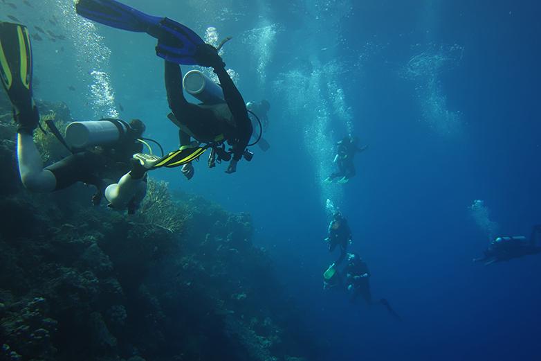 Професор Смит и неговите студенти изучават живота в кораловия риф. Снимка: University of Essex
