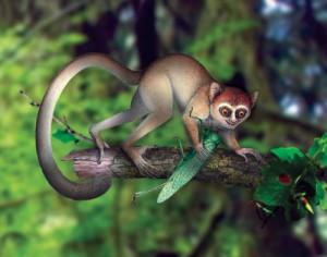 Илюстрация на най-древния примат, кръстен Archicebus achilles. Автор: NI Xijun