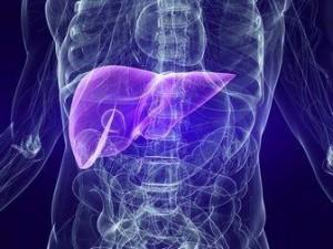 Учени за първи път в историята успяха да създадат човешки черен дроб от стволови клетки