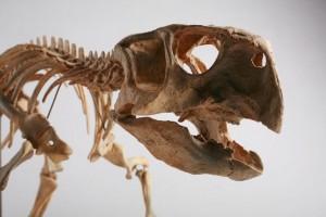 Отливка на скелет на пситакозавър. Снимка: Michelle Pemberton (CC BY-SA 3.0)