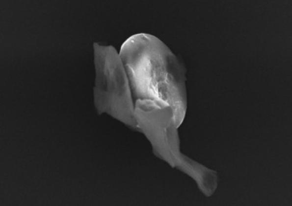Още един от микро-обектите в пробите. Снимка: University of Sheffield