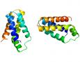 """<p>Учени показаха, че потискането само на един ген, води до увеличаването на живота при мишки с 20%. При хората това би било еквивалентно на удължаване на средната продължителност на живота … <a href=""""http://www.nauteka.bg/sciences/medicine/manipuliraneto-samo-na-edin-gen-udulji-jivota-na-mishki-s-20/"""" class=""""read_more"""">още</a></p>"""