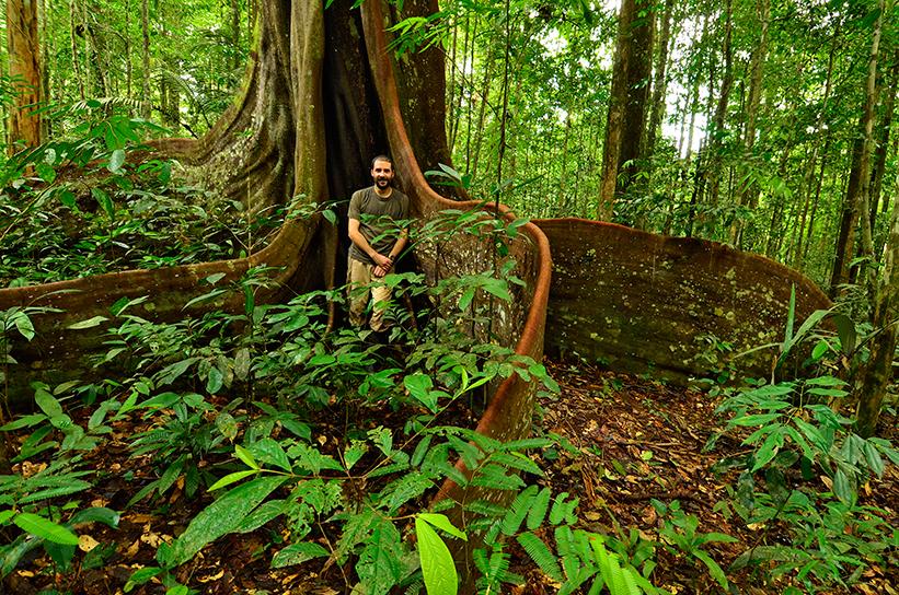 Един от участниците в експедицията - Тронд Ларсен - позира сред огромните корени на дървото Peltogyne venosa. Благодарение на кореновата си система дървото може да издържи на силни бури и наводнения. То има една от най-здравите дървесини в света. Снимка: © Trond Larsen