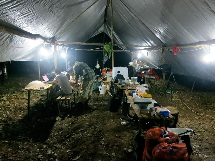 """""""Палатка за изследвания"""", в която учените анализирали и обработвали информацията за откритите видове. Генератор им позволявал да работят до късно, за да използват оптимално времето си. Снимка: © Andrew Short"""
