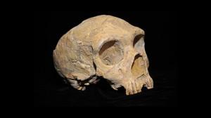 Неандерталски череп. Снимка: AquilaGib (CC BY-SA 3.0)