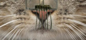 Е-мустаците, създадени от учените, са изключително чувствителни. Снимка: University of California at Berkley