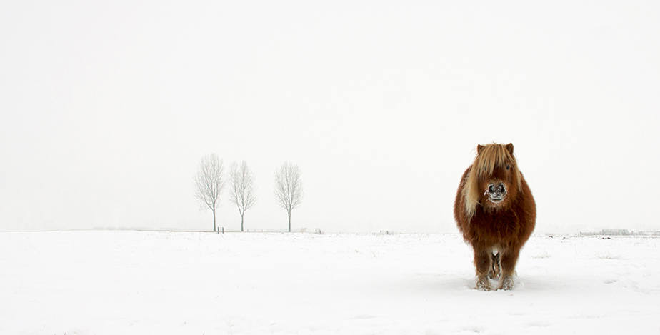 Пони и снежен пейзаж. Снимка: © Gert van den Bosch, Netherlands, Winner, Nature & Wildlife, Open Competition, 2014 Sony World