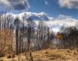 """<p>Изследване показа, че листата, повалените дървета и други останки от растения в района на Чернобилсе запазват дълго след като те са умрели.</p> <p>Вече почти 30 години изминаха от катастрофата, … <a href=""""http://www.nauteka.bg/sciences/environment/kakvo-kara-listata-v-chernobil-da-se-zapazvat-dulgo-sled-kato-sa-umreli/"""" class=""""read_more"""">още</a></p>"""