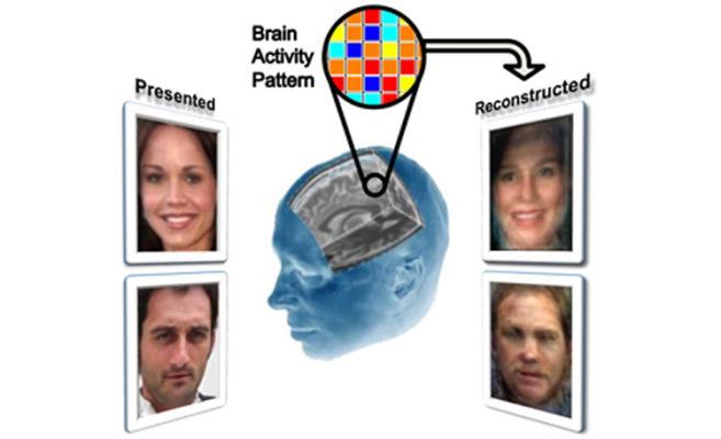 Отляво са показани истинските снимки, а отдясно - реконструкцията на базата на мозъчната дейност. Изображение: Alan Cowen
