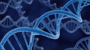 ДНК. Изображение: Creative Commons