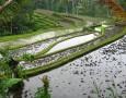 """<p>Миналата година учени от Университет Жеджянг в Хангжу, Китай установиха защо отглеждането на риба в оризищата води до същото количество реколта от ориз, при употреба на 68% по-малко пестициди и … <a href=""""https://www.nauteka.bg/sciences/i-want-to-know/iskam-da-znam-kakvo-sa-orizoribkite-i-za-kakvo-gi-izpolzvat-v-kitaiskite-fermi/"""" class=""""read_more"""">още</a></p>"""