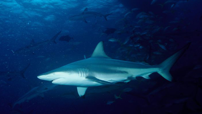 Намаляването на числеността на основните морски хищници в Черно и Средиземно море може да доведе до сериозни последици за екосистемите в тях, се казва в доклада на ООН