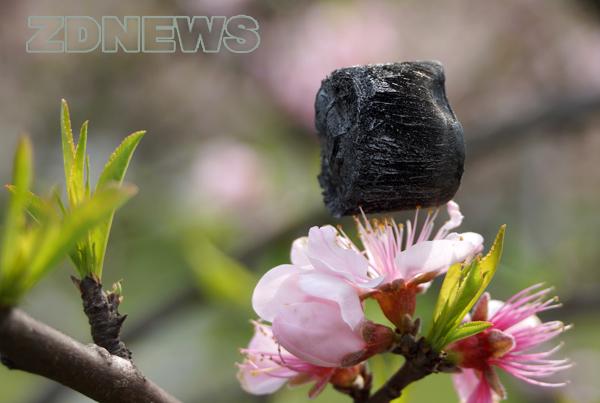 Демонстрация на качествата на графеновия аерогел. Снимка: Zhejiang University