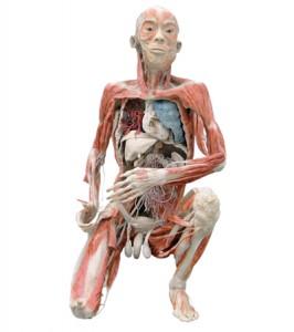 """Изложбата """"Човешкото тяло-разкрито и реално"""" се помещава на 3 ет. в ЦУМ"""