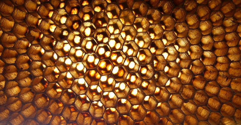 Пчелна пита.