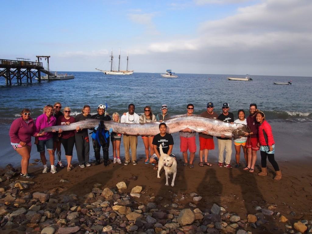Рибата-гребло, открита от Джасмин Сантана. Снимка: Catalina Island Marine Institute