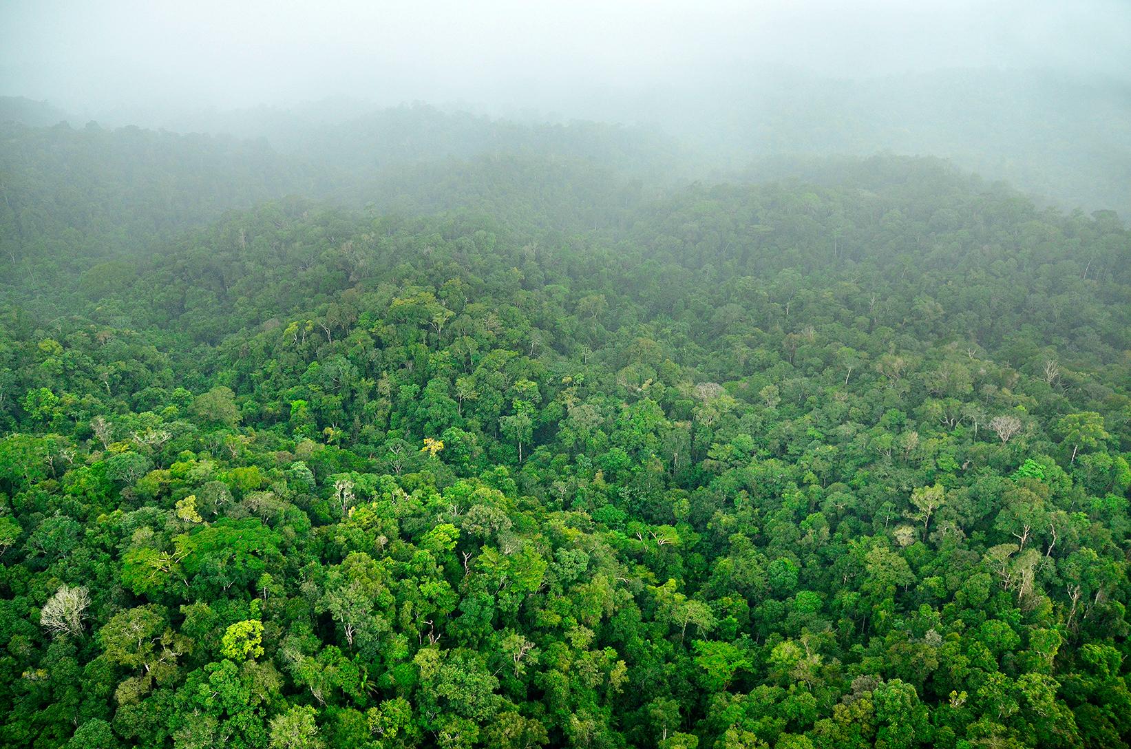 Планините и недокоснатите гори на югоизточен Суринам често са забулени в облаци, тай като това е едно от най-влажните места в страната. Тази зона е важен източник на вода за повече от 50 000 души. Снимка: © Trond Larsen