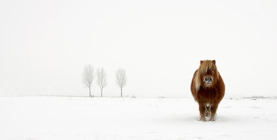Пони и снежен пейзаж. Снимка: © Gert van den Bosch, Netherlands, Winner, Nature & Wildlife, Open Competition, 2014 Sony World