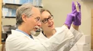 Джеф Бука разглежда проба от модифицирания организъм. Снимка: NYU Langone Medical Center